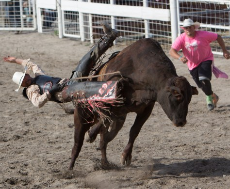 A bull gains the upper hoof in a 2015 ride at the Cleatis Lacy Bull Ride.