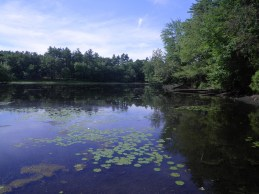 GCT's Wattles Pond Conservation Area, in the path of the proposed pipeline.