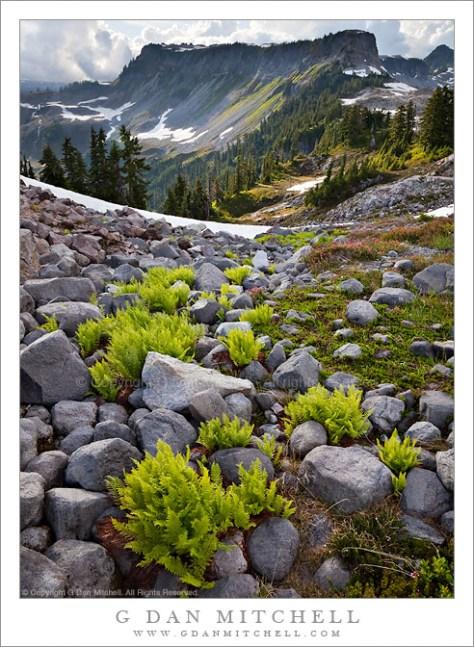 Ferns and Rocks, Artist Point