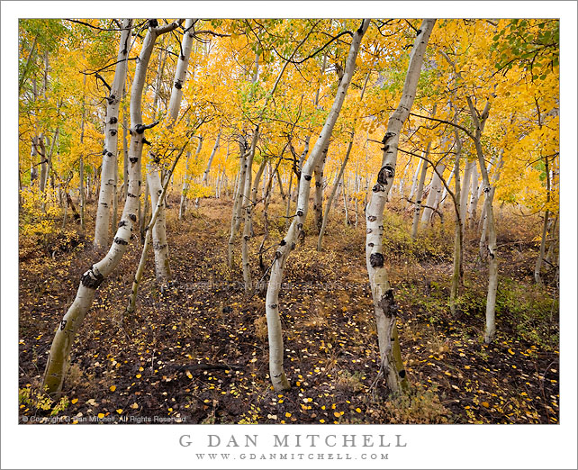 Aspen Grove, Bishop Canyon