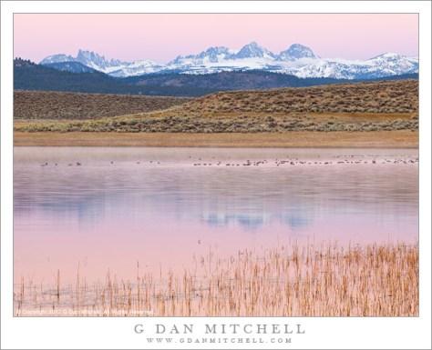 Dawn Light, Alkali Lake and the Minarets - Pink dawn light illuminates the surface of an Alkali Lake and the Minarets, and Mounts Ritter and Banner