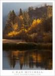 Aspen Trees, Shoreline of North Lake