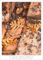 Autumn Detritus, Zion National Park