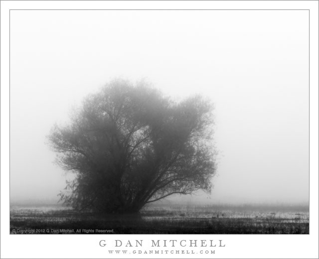 Marsh, Tree, Fog - A small tree in a foggy marsh
