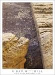 Sandstone Patterns, Dried Plant