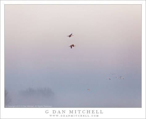 Cranes and Geese, Morning Fog
