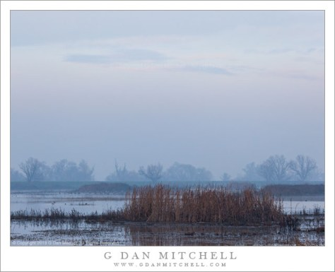 Foggy Marsh, Dawn Light