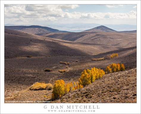Sagebrush and Aspens