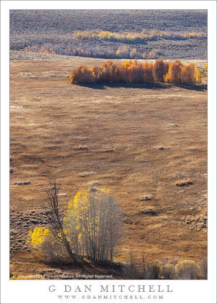 High Desert Aspens, Autumn