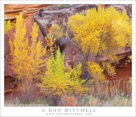 Autumn Cottonwoods, Red Rock Cliffs