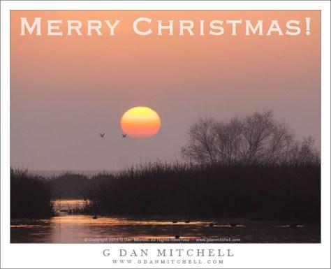Merry Christmas 2014! (Two Cranes, Sunrise)