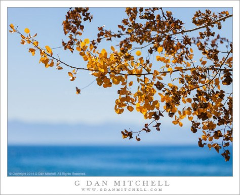 Autumn Leaves, Tahoe Shoreline