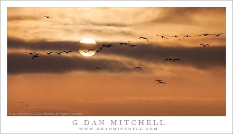 Geese, Sun, Winter Clouds