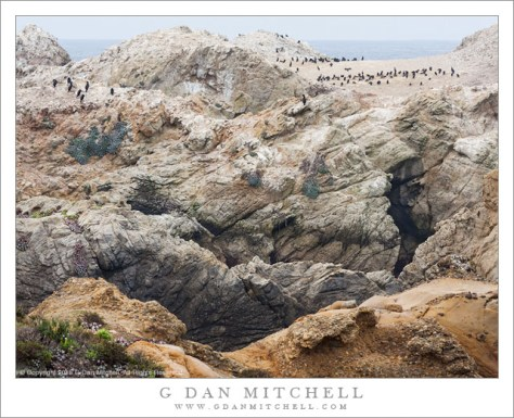 Cormorants, Coastal Rocks