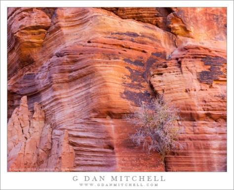 Canyon Walls, Plant