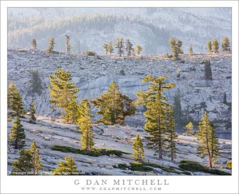 Receding Ridges, Trees, Morning