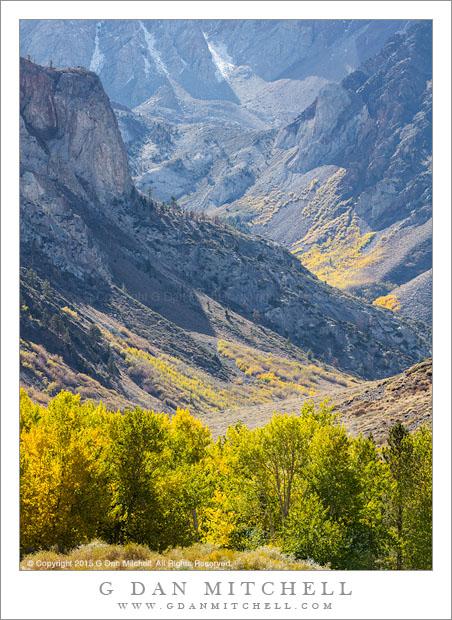 Fall Foliage in Transition, Eastern Sierra