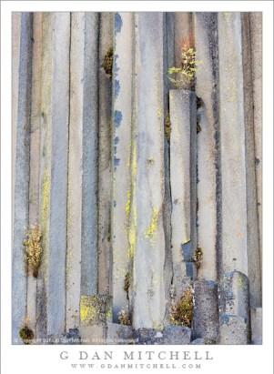 Basalt Columns, Lichen, Autumn Plants