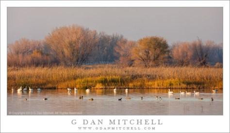 Marsh, Fog, Evening Light