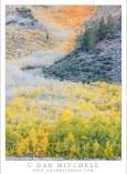 Autumn Aspens, Eastern Sierra Gully
