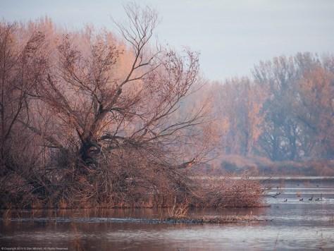 Wetlands, Early Light