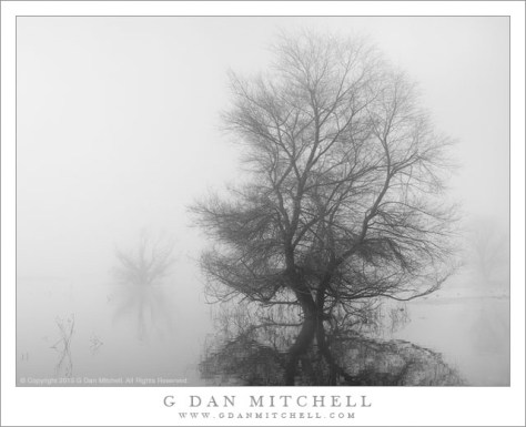 Wetlands Tree, Fog