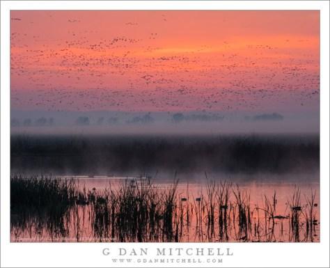 Sunrise, Marshland, Birds