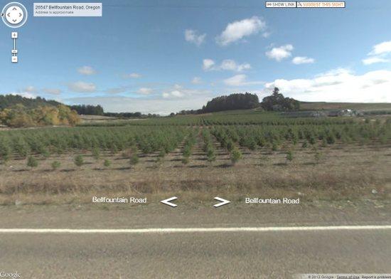 tree-farm.jpg