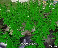 3D Trees in Google Earth