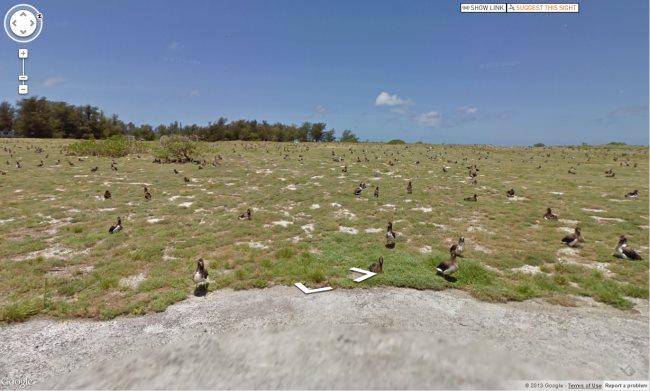 midway-birds