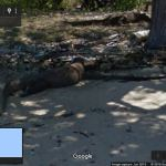 Komodo Dragons in Street View