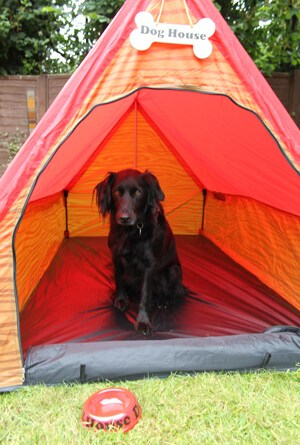 Hey, it's a dog in a tent!