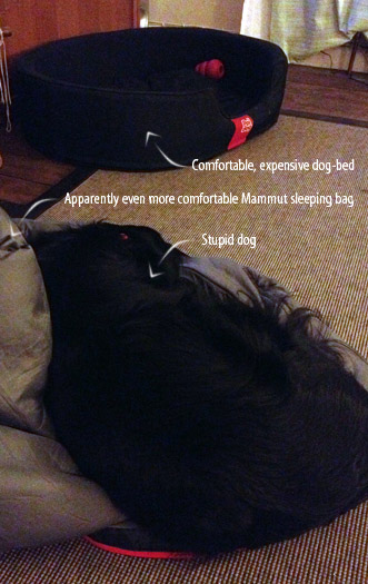 We let sleeping dogs lie