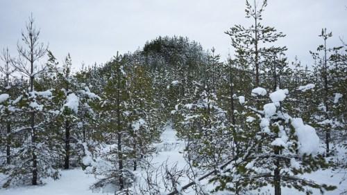 Puuvuori - Tree Mountain by Agnes Danes - Pierre view
