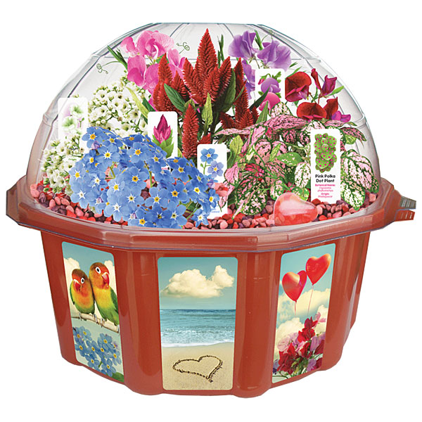 Grow Your Own Love Dome - Geek Decor