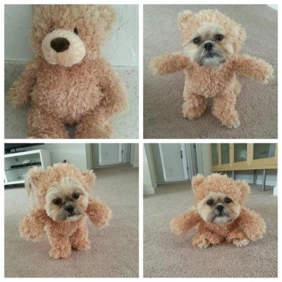 Teddy Bear Dog Costume - Geek Decor
