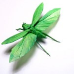 Flying katydid