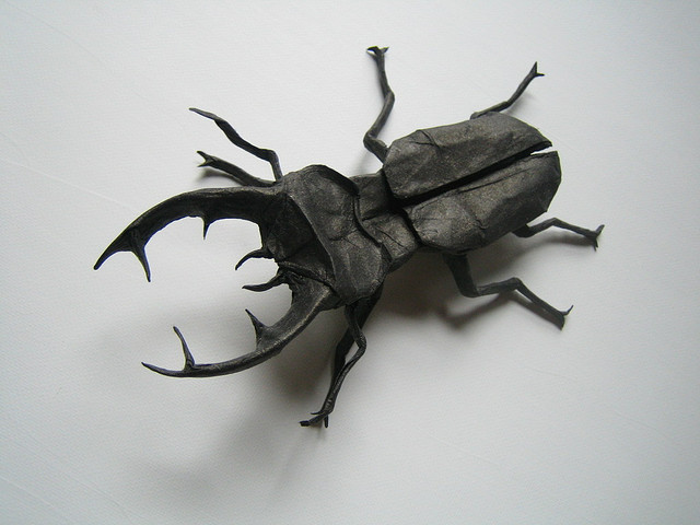 Lucanus cervus