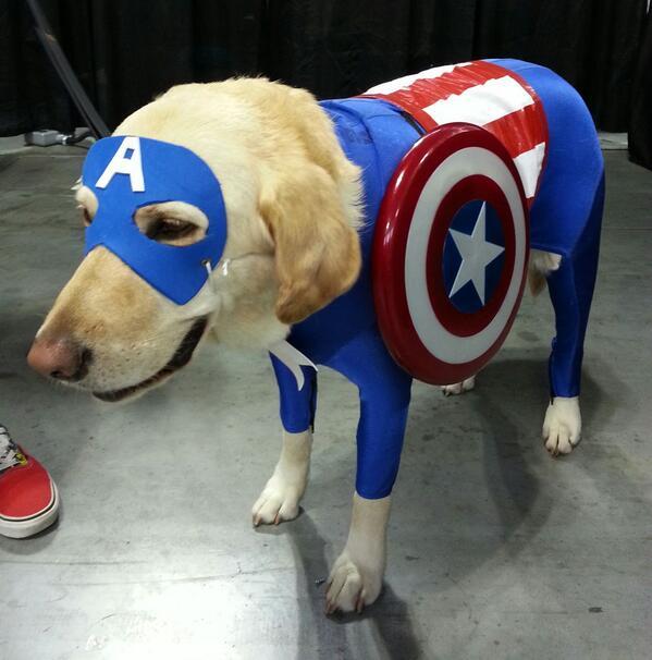 Capt America doggie