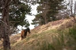 I cavalli selvaggi dell'Aveto