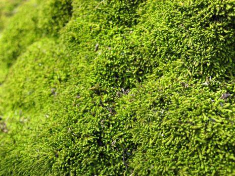 Humble moss helped create-GeologyPage