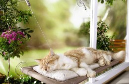 Pamper your Feline Friend with the Sunny Seat Window-Mounted Cat Bed