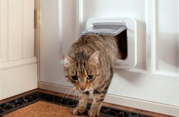 Make your Cat Feel at Home with the SureFlap Microchip Cat Door