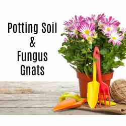 Small Crop Of Home Depot Potting Soil