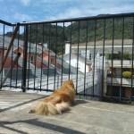 dog-terrace