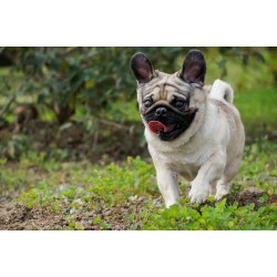Small Crop Of Reverse Sneeze In Dogs