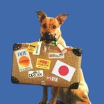 Eleven Tips to Help You Safely Transport Your Pet to Australia