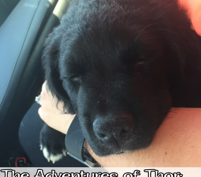 The Adventures of Thor: The New Addition