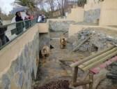 Darıca Hayvanat Bahçesi - 03
