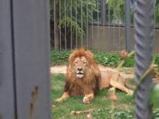 Darıca Hayvanat Bahçesi - 06